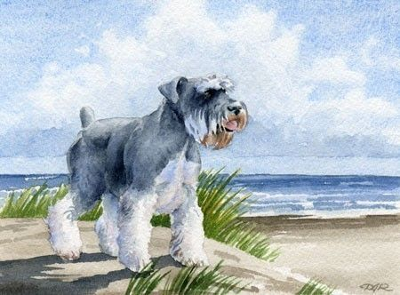 Mini Schnauzer watercolor by DJ Rogers Schnauzers ~ ✞ ♥ I asked God for a Best Friend. He gave Me a Schnauzer. ♥ ✞