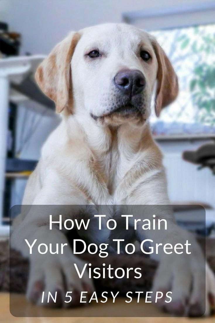 Discreet calculated dog training online   Puppy & Dog