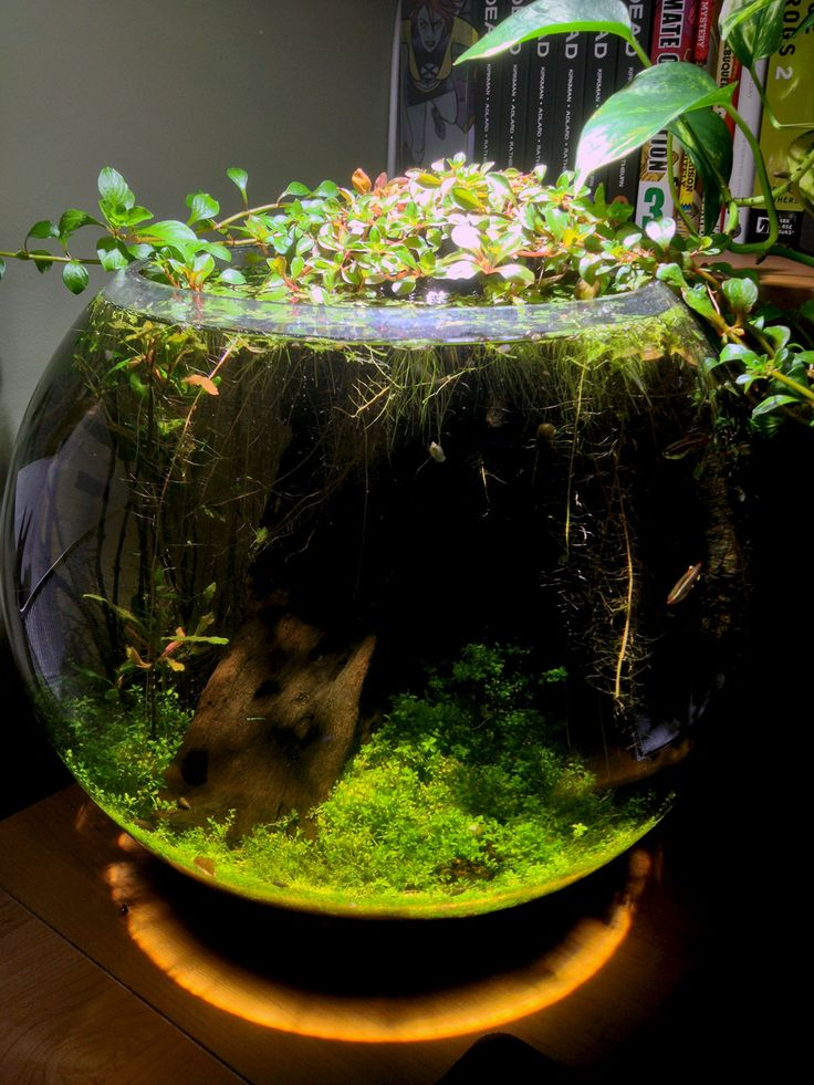Great jarrarium, breakdown of plants + supplies here: http://www.reddit.com/r/Aquariums/comments/1fyr0p/my_home_office_bowl_dirt_planted_and_low_tech/