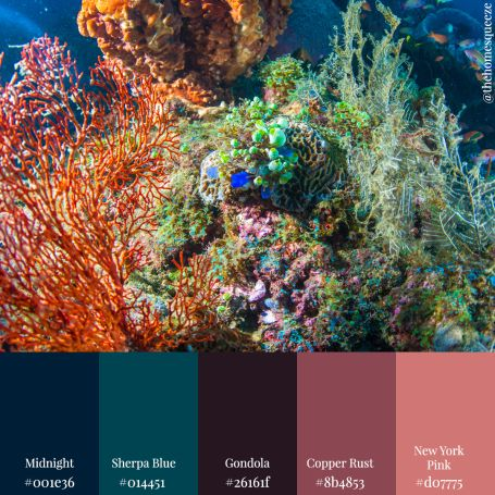 'Hometown Coral' Color Scheme from 11 Color Schemes: Seascape Edition
