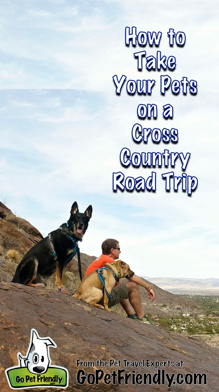 How To Take A Cross Country Road Trip With Pets Road Trip With