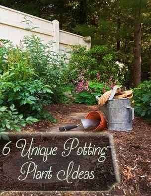 6 Unique potting plant ideas- love these :)