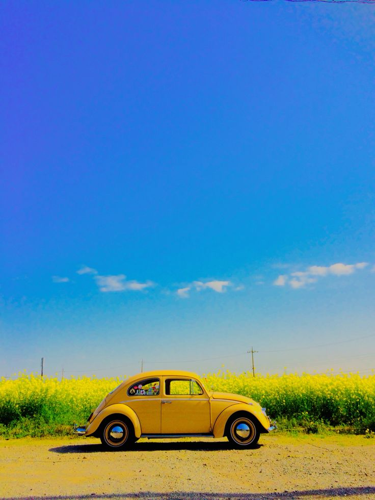 "Beetle…….WE OWNED A BEETLE…..LOVED IT…….NEVER GOT TO DRIVE IT MUCH -- THE GIRLS LOVED IT ALSO--NEED I SAY MORE(??)……THEY CALLED IT ""THE BUG""……………ccp"