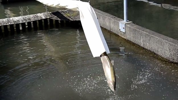 The Salmon Cannon can shoot 40 fish per minute over a 7-story building | Geek-Cetera | Geek.com