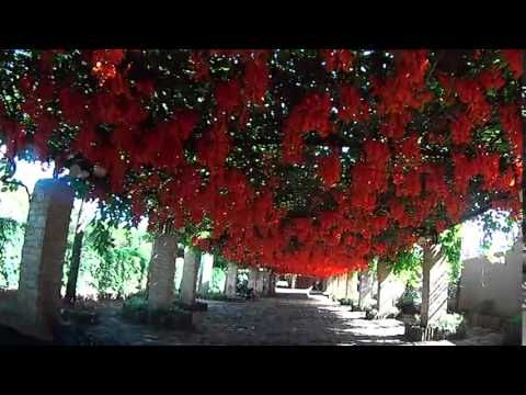 Trepadeira Jade Vermelha - YouTube