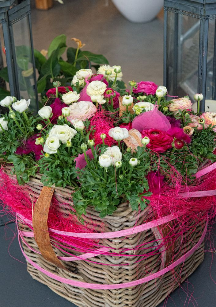 pink decorated basket with Ranunculus white and pink