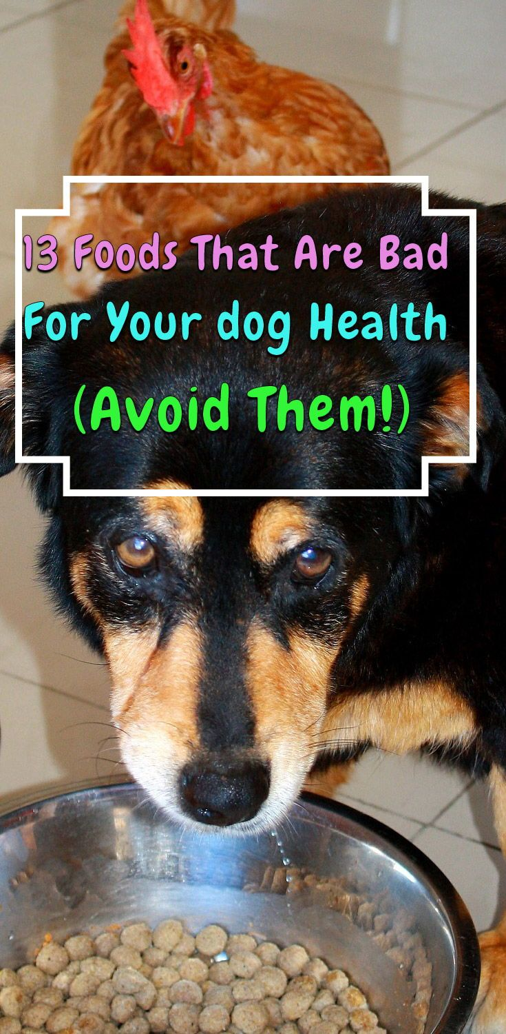 13 Toxic Foods For Dogs Your Should Never Eat Dog Food Recipes