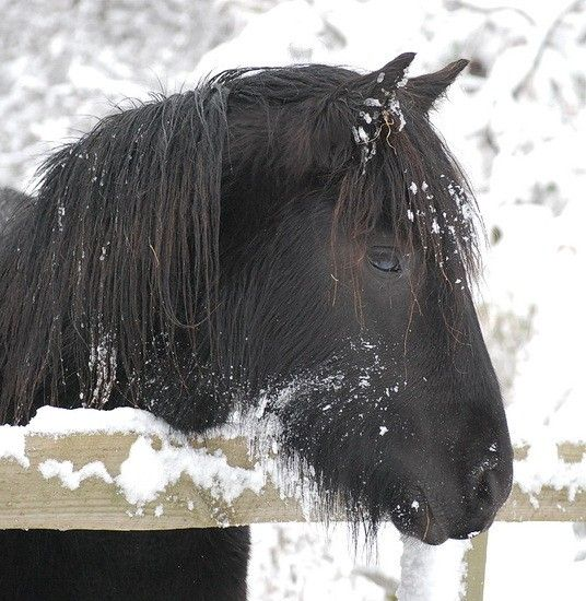 1751 besten horses in snow no pin limits bilder auf pinterest sch ne pferde pferde im. Black Bedroom Furniture Sets. Home Design Ideas