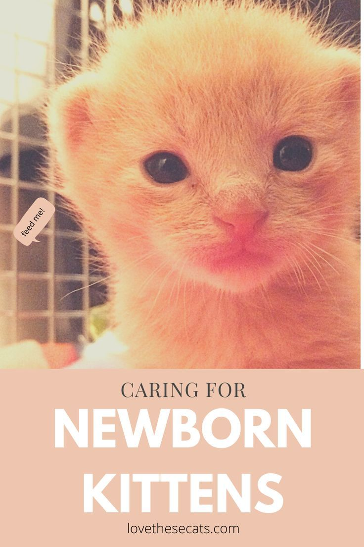 How To Care For Newborn Kittens In 2020 Newborn Kittens Kittens Baby Kittens