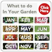 A wide variety of Perennial Plants from Suttons Seeds - Suttons Seeds and Plants