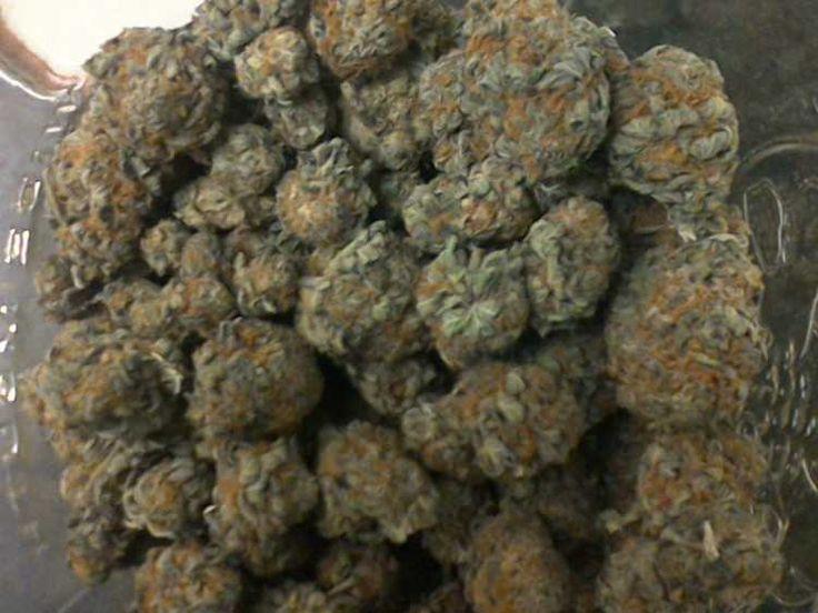 we+got+all+strains+of+kush+and+medical+Marijuana+but+we+recommend+these+high+grades.+text+or+call+%28720%29+577-4760+themedicinalcannabisdispensary%40gmail.com+Grand+Daddy+Purple+Green+Crack+sour+Diesel+Sattiva+Sensi+Star+x+ak47+Afghan+Kush+Northern+Lights+Lemon+drop+lemon+haze+Indica+Purple+Kush+OG+Kush+purple-urkle+Blue+Hawaiian+Columbian+Gold+white+widow+Hash+Oil%2C+Honey+Comb+Wax+Oil+Wax+Oil+Cannabis+Oil+BUTANE+OIL+AFGHANI+OIL $250