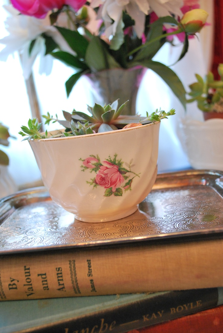 Sugar Bowl Succulents. Beautiful addition to a wedding, baby shower or just a cup of Tea!