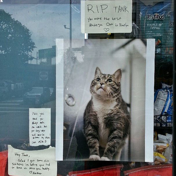 25 Places You'll Find Bodega Cats | 25 Places You'll Find Bodega Cats. Oh boy. The last one really got me..   : (  There should be kitties in all stores.