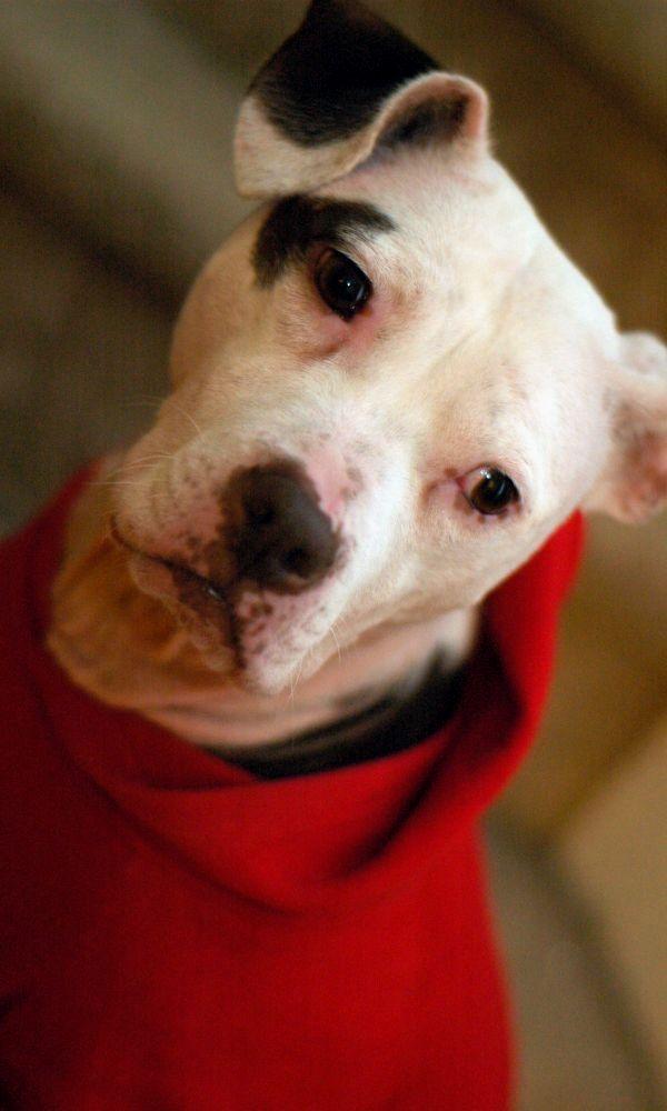 Pitbull Training Reasons Why You Should Train Your Pitbull Pitbulls Pitbull Training Pitbull Dog Names