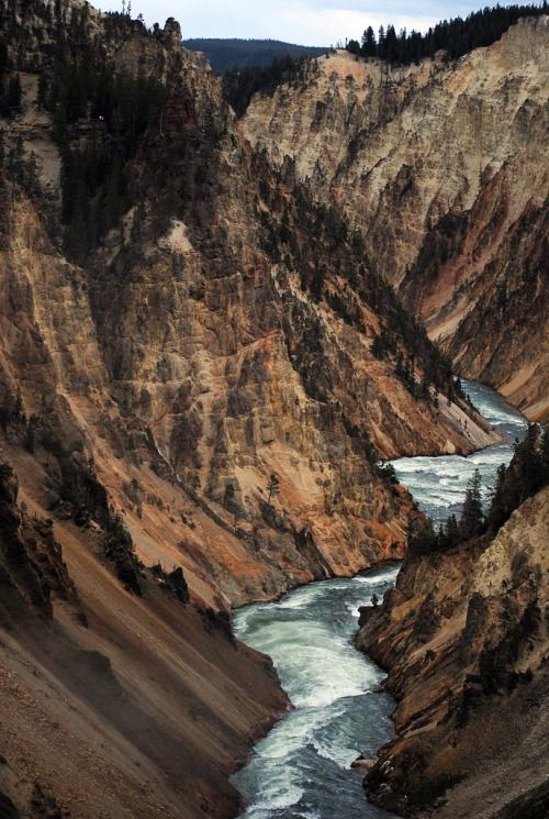 4nimalparty: yellowstone (by andrés v-j)