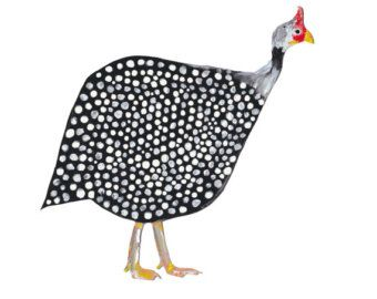 Animales fotografía retrato de una gallina de Guinea en la Ave