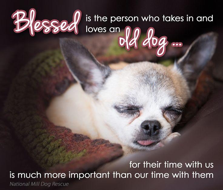 Senior Cat Quotes: 158 Best Images About Senior Pet Love On Pinterest