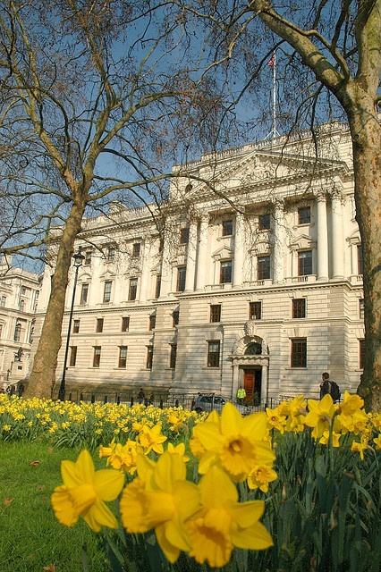 Daffodils and the Treasury entrance by HM Treasury, via Flickr