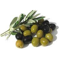 135mm Olea Europaea 'Manzanillo' Olive Plant