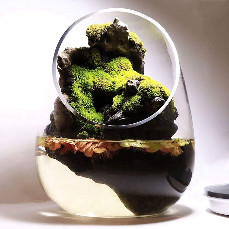 1162 Best Images About Beautiful Of Terrariums On