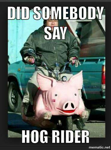 Anyone want hog riders