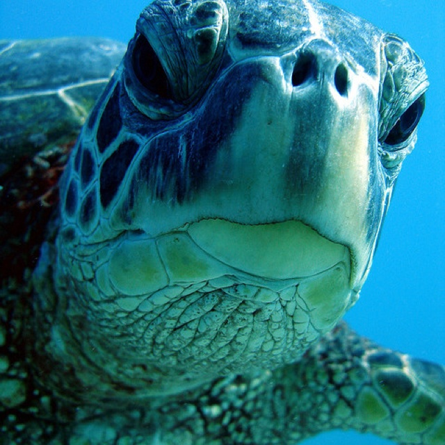 Hi. love love love sea turtles