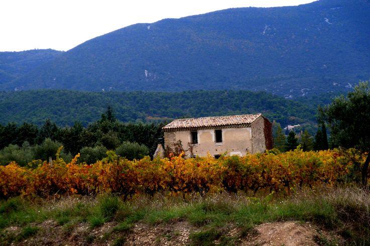 Vignoble de Vaucluse