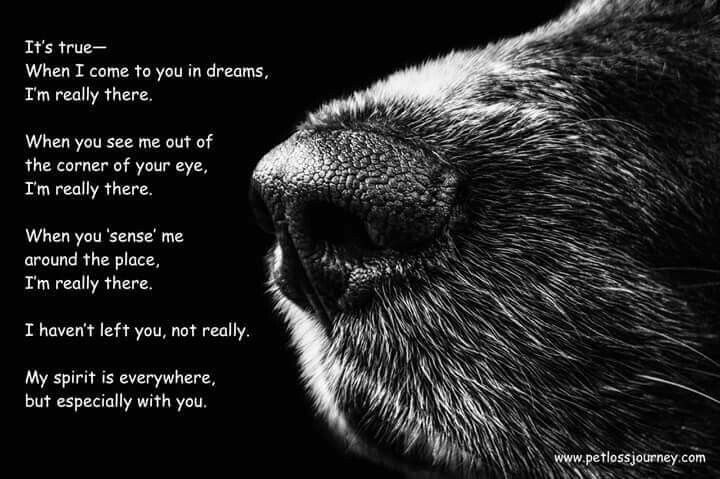 I come to you in my dreams - dog bereavement poem