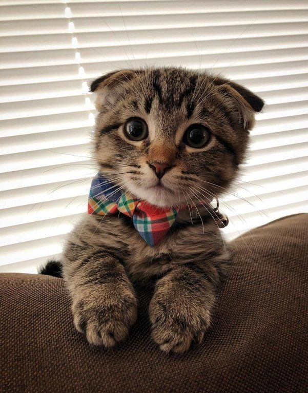 Reddit The Front Page Of The Internet Cute Animals