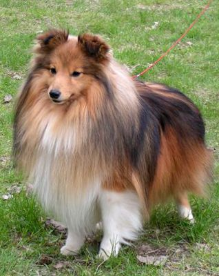 17 Best images about Small Dog Breeds on Pinterest ...