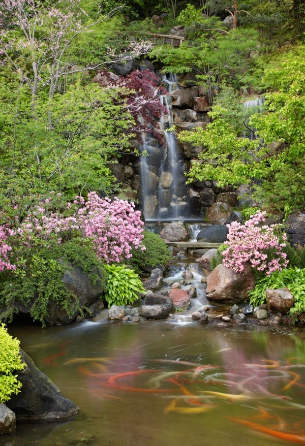 17 best images about anderson japanese garden on for Japanese koi pond garden