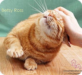 Betsy Ross, a beautiful red tabby was rescued two years ago while in labor, and arrived at Animal House Fund just in time to give birth to her kittens. Betsy was a wonderful mom, and even took on an orphaned foster kitten. Now, it's this supermom's turn to be babied by a family of her very own, Betsy is a quiet and affectionate girl who loves to sit on laps, and if you rub her head and scratch her ears, you will be her best friend forever!
