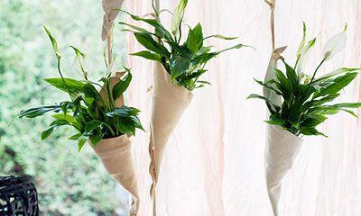Meer groen in huis? Maak met de Lepelplant een gordijn. Niet alleen is het resultaat leuk, ook het maken ervan…