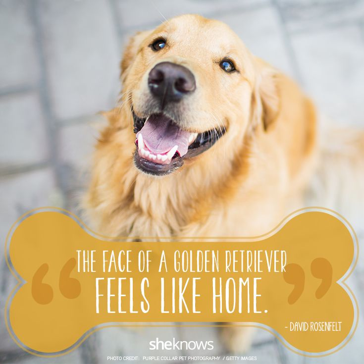 The golden hearted dog❤️