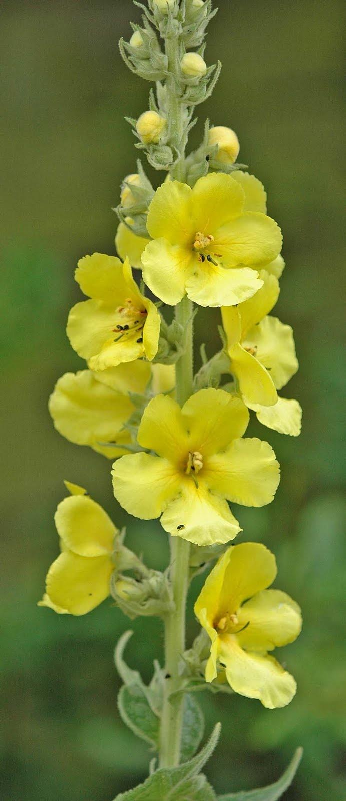 Mejores 111 imágenes de Plantas, flores, jardines en Pinterest ...