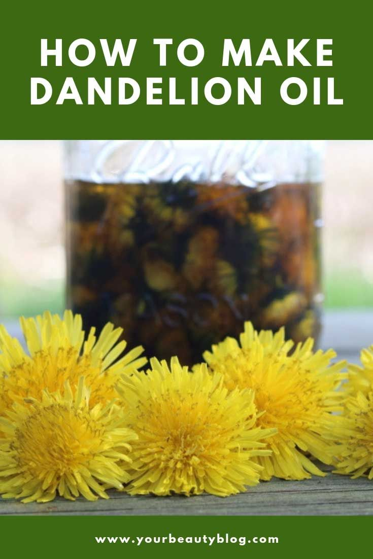 Dandelion Oil Benefits And Uses And How To Make It Dandelion Oil Oil Benefits Diy Natural Products