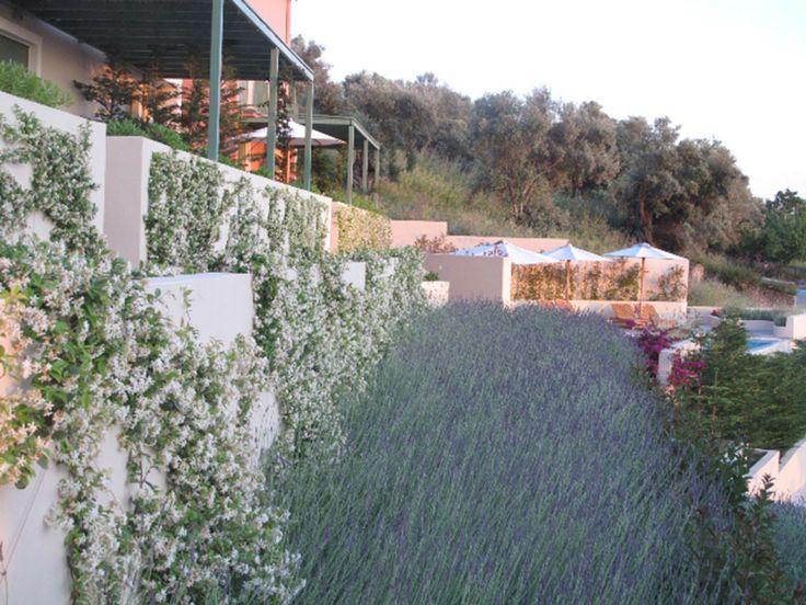 Lovely garden full of lavenders