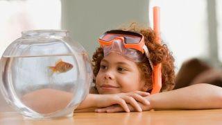 Top 3 Pet fish for kids