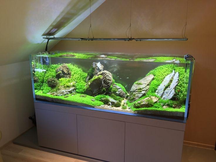 3544 best aquarium images on pinterest fish aquariums for Garden aquarium design
