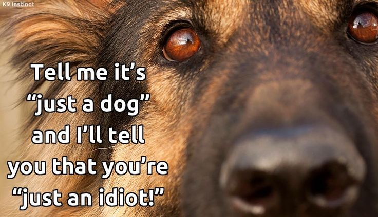 17 Best images about Nothing Like a German Shepherd on ...