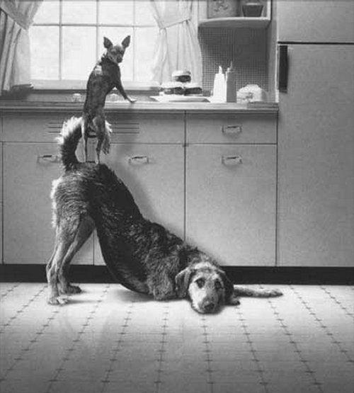 動物の友情14