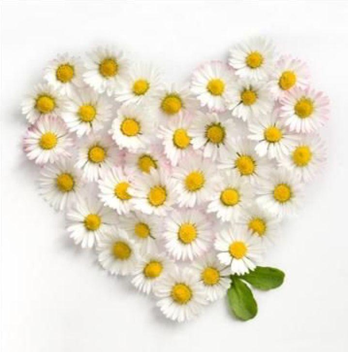 Дню снятия, открытка сердечком из ромашек