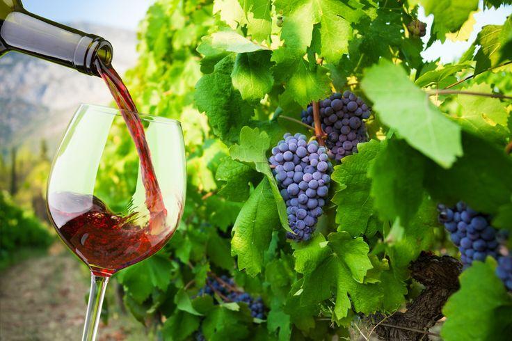 Organiczne wina