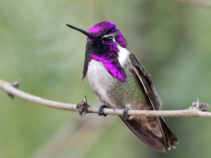 Interesting Hummingbird Facts – Hummingbird Migration, Where Do They ...