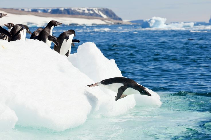 Guanacos & Penguins! Win a trip to Shouthern Chile & Anarctica with Columbia! #Penguins #widllife #sweep #travel #win