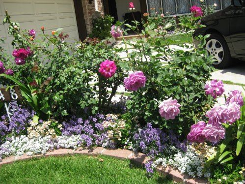 A pretty small garden bed with roses and annuals for Garden flower bed ideas
