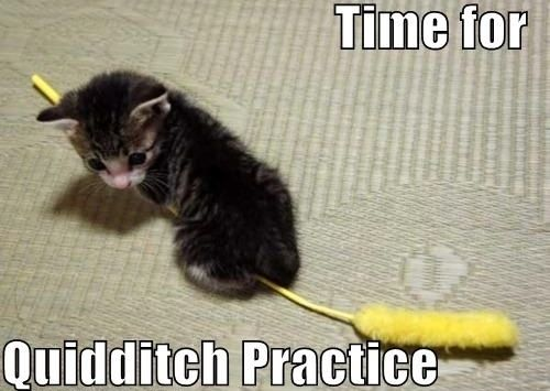 HP Kitty!: Cats, Kitten, Animals, So Cute, Harrypotter, Funny, Harry Potter, Kitty, Quidditch Practice