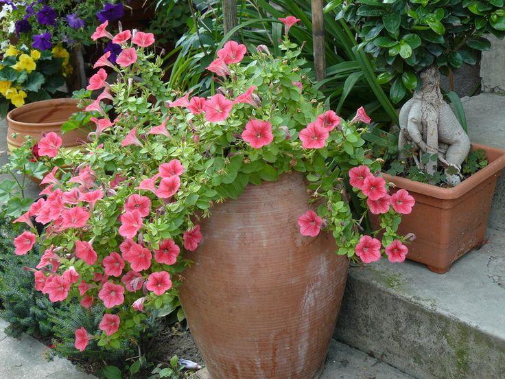 terasz növényei - Google Search
