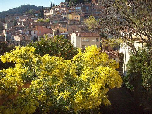Bormes-les-Mimosas, Var. (par Only Tradition)
