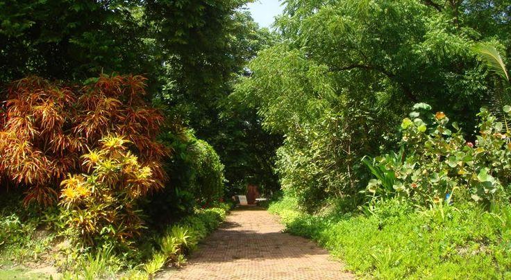 Jardín Botánico de San Andrés islas, Colombia : has senderismo mientras conoces naturaleza y riqueza en flora de la isla :D #HosteriaMarySol